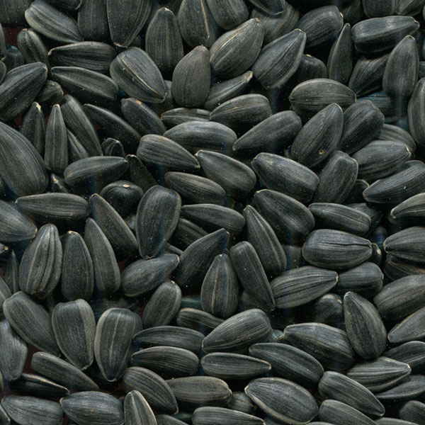 зернових та олійних культур